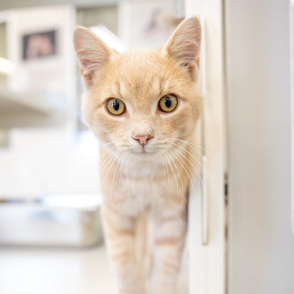 Cat Foster Care Application