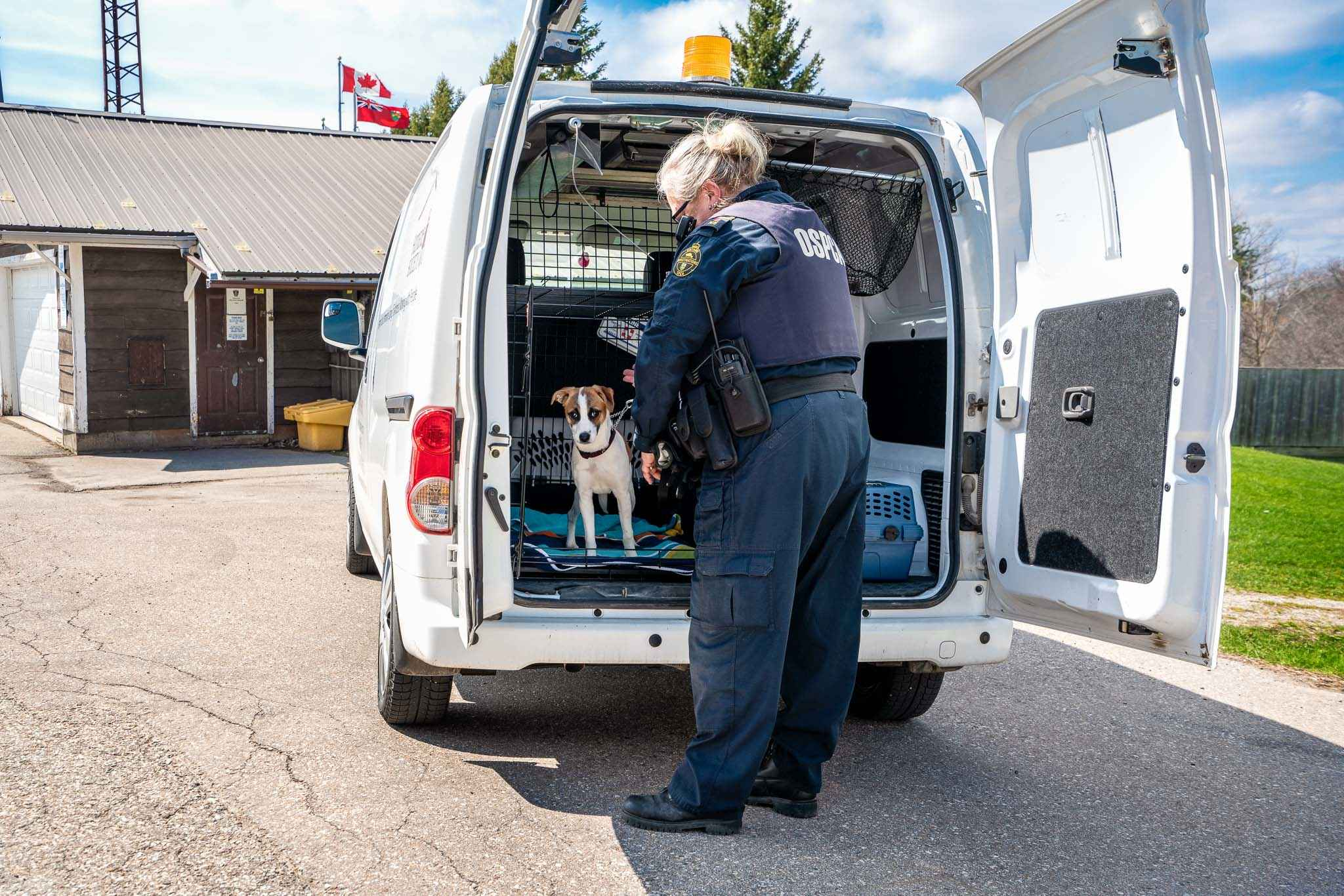 Photo of an Animal Control Officer and a dog at the back of a Humane Society van