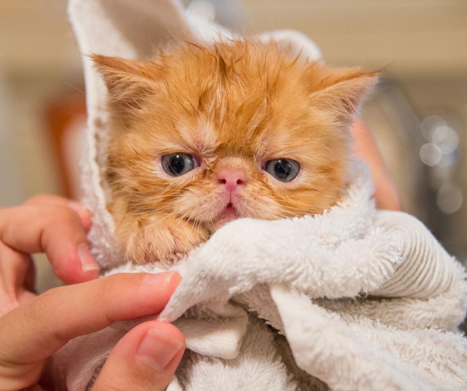 Kitten in towel