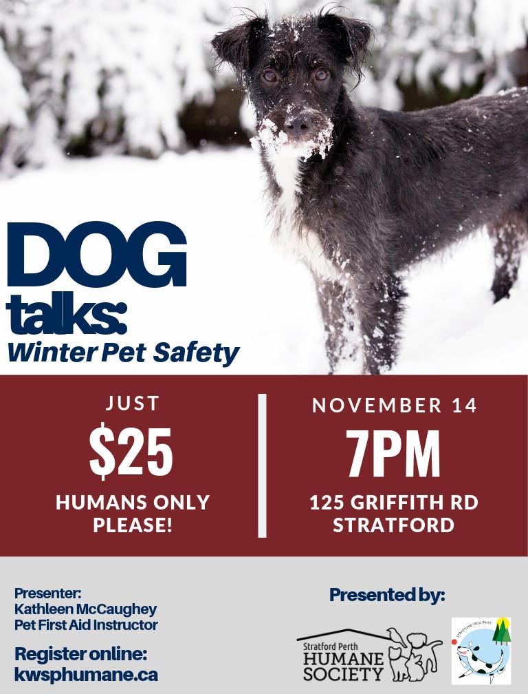 Dog Talks: Winter Pet Safety