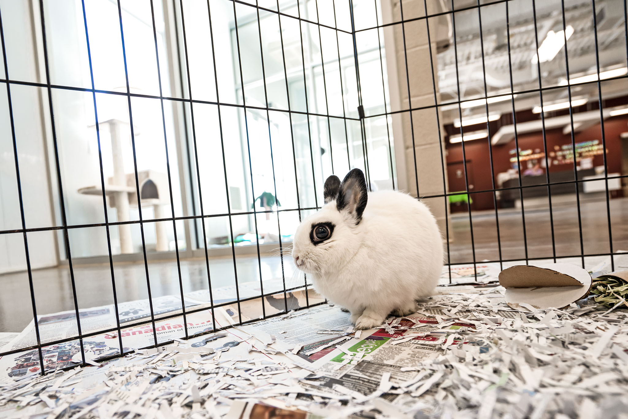 Photo of a rabbit at the Stratford Centre