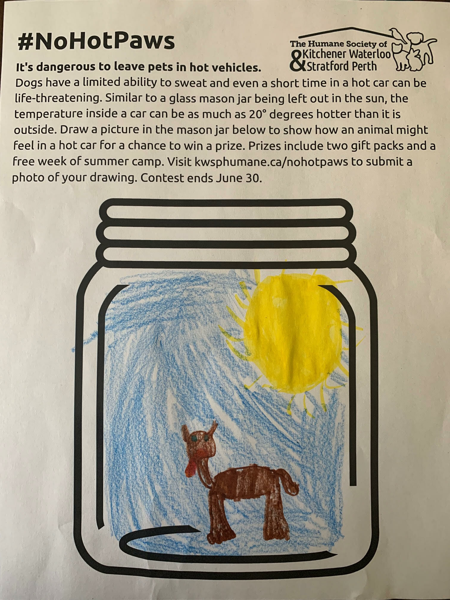 My picture is of a dog sticking out its tongue because it's hot and dogs need to go inside because they can't sweat very much to lose their heat so all their heat will stay inside their body and they might get sick - by Maya Campbell (age 8)