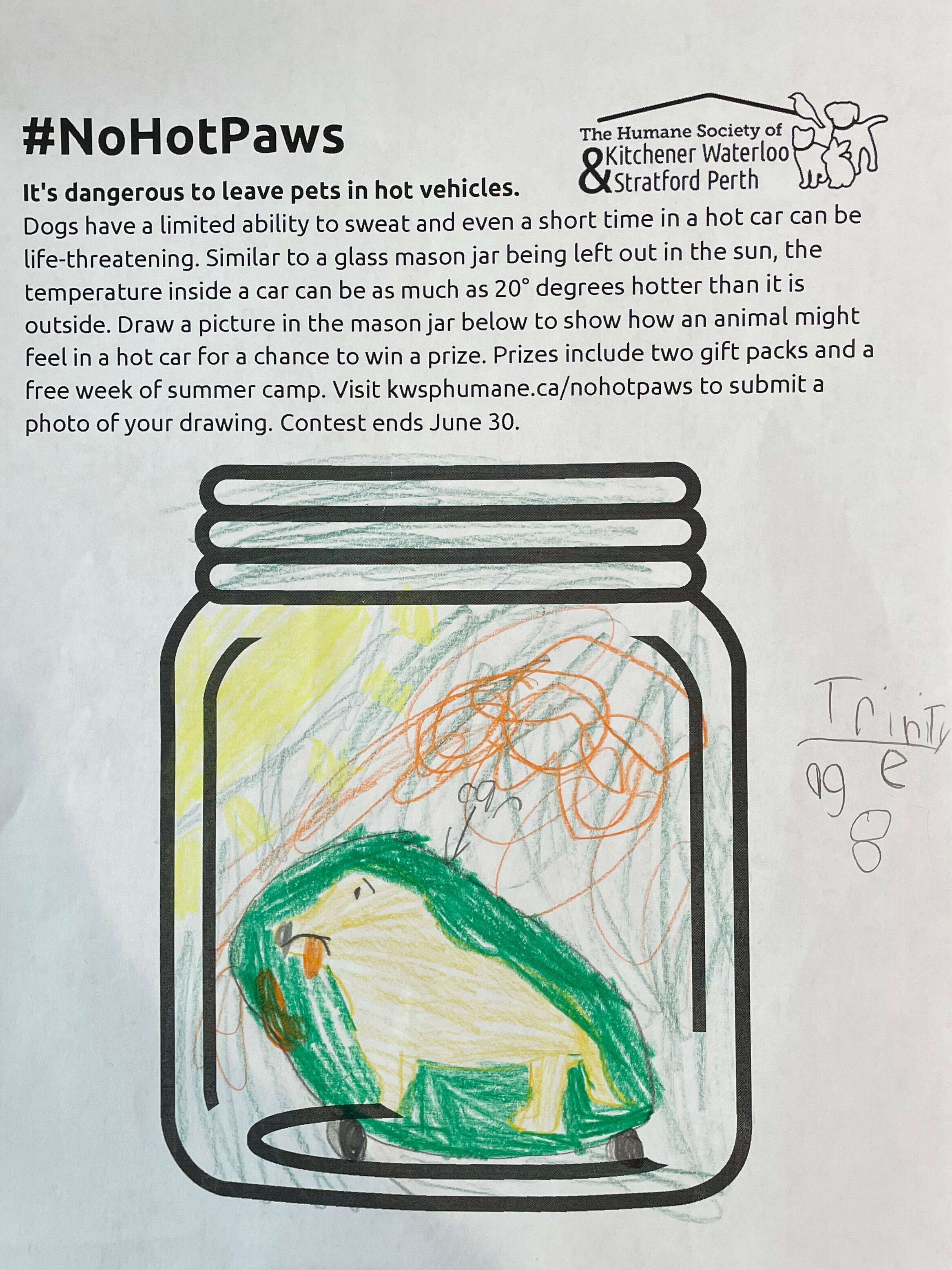 This is a picture of a dog named Loose. She is standing in a car and it's very hot. She is sad because she is so hot - Trinity Regehr (age 8)