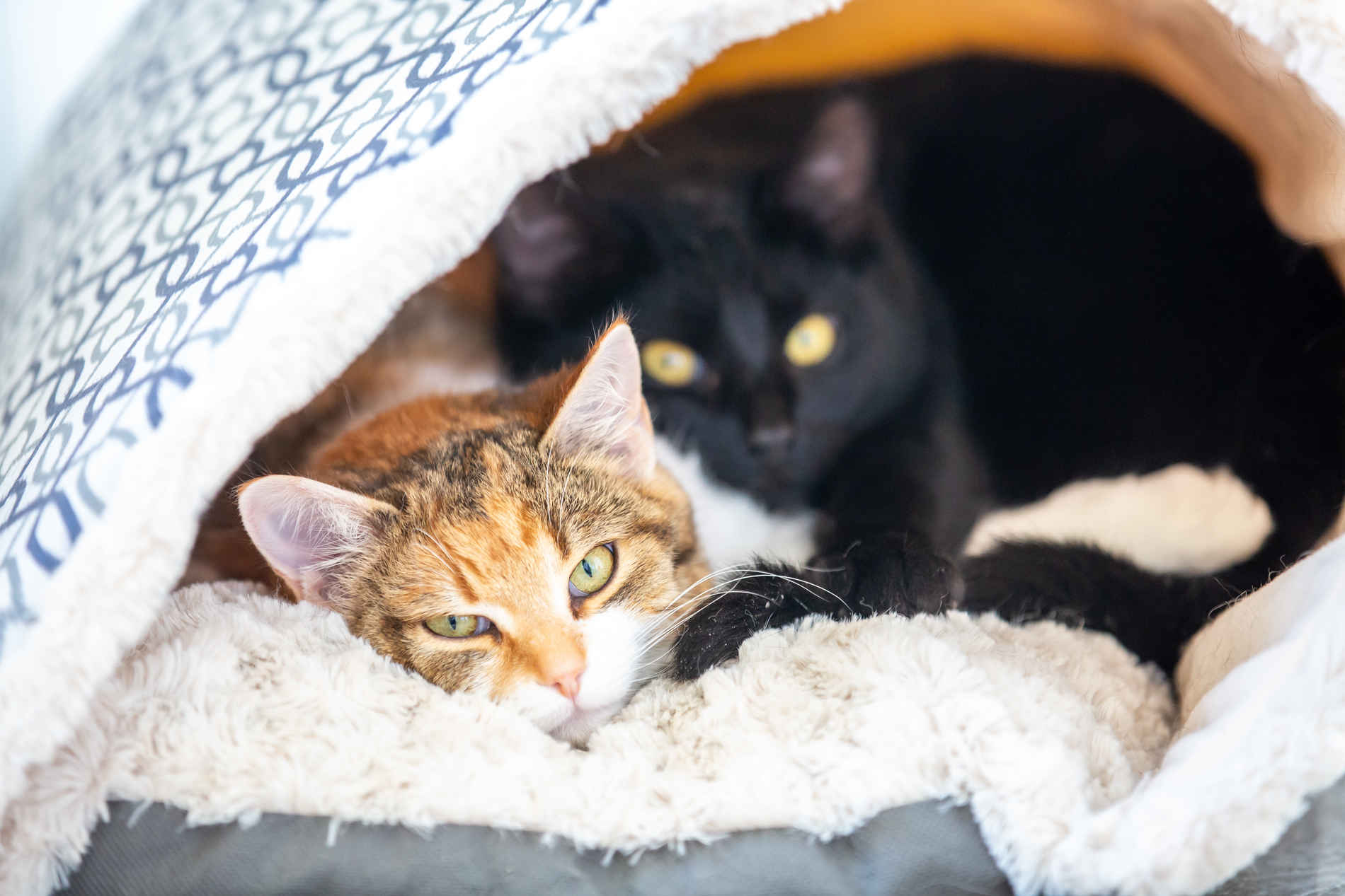Photo of two cats in a cat house at the Stratford Centre